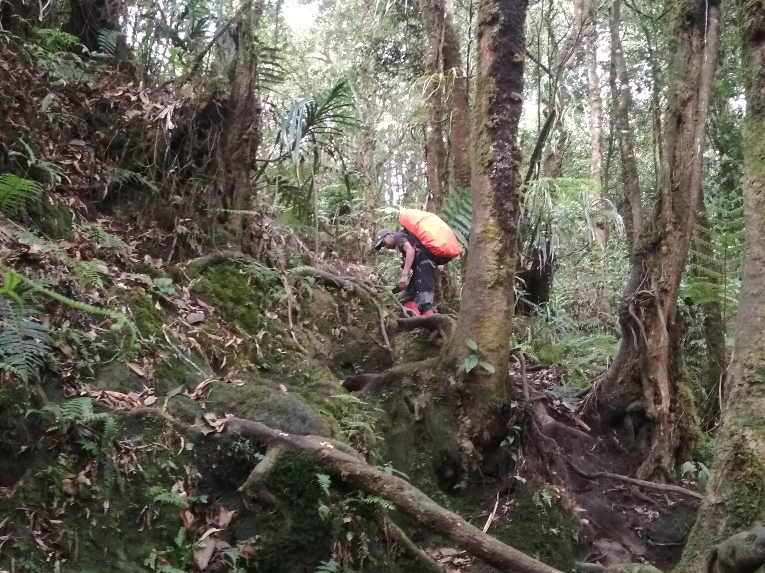 Suasana Jalur Pendakian Puncak Manik atau Salak I, Taman Nasional Gunung Halimun Salak (TNGHS), Jawa Barat