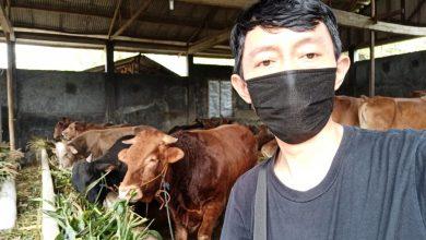 Photo of Diperkirakan Prospek Penjualan Hewan Kurban Meroket Tajam