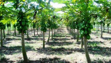 Photo of IPB University Libatkan Petani dalam Pengembangan Taman Teknologi dan Agribisnis
